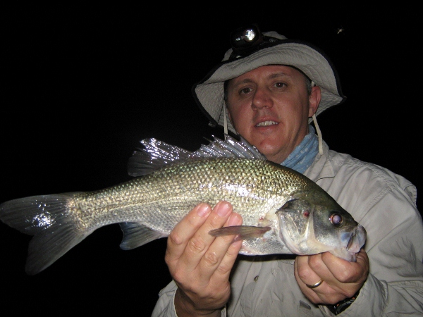 One of a number of 40cm fish caught by Rob
