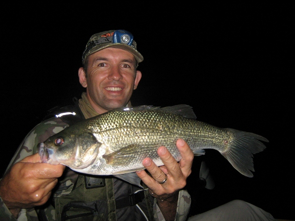 A solid 44cm bass
