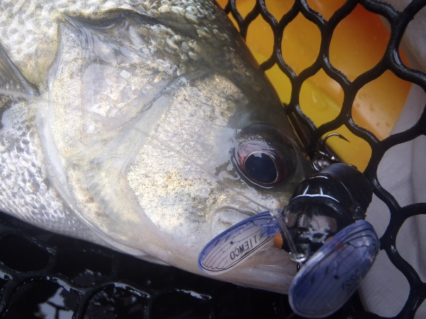 The pinnacle of Australian bass fishing has to be targeting them off the surface!