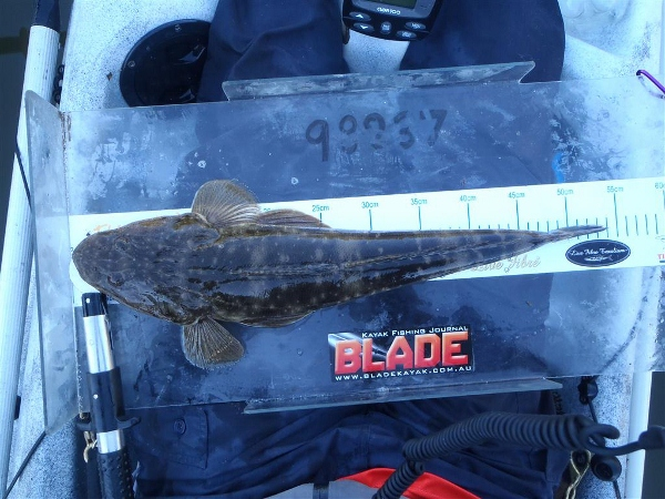 A 54cm flathead puts points on the board