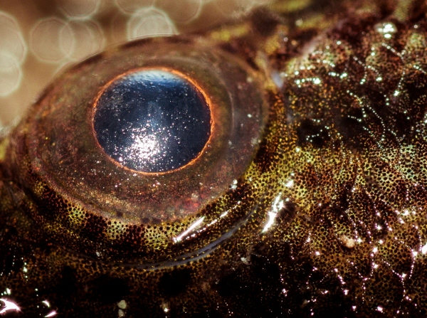 Steve is an amazing photographer and this macro showing he colours of the fish and its eye is awesome!