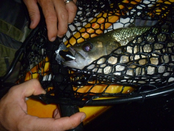 The bass had their surface radar tuned in!
