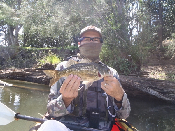 My second bass of the day at 34cmFL and caught n close quarter combat.